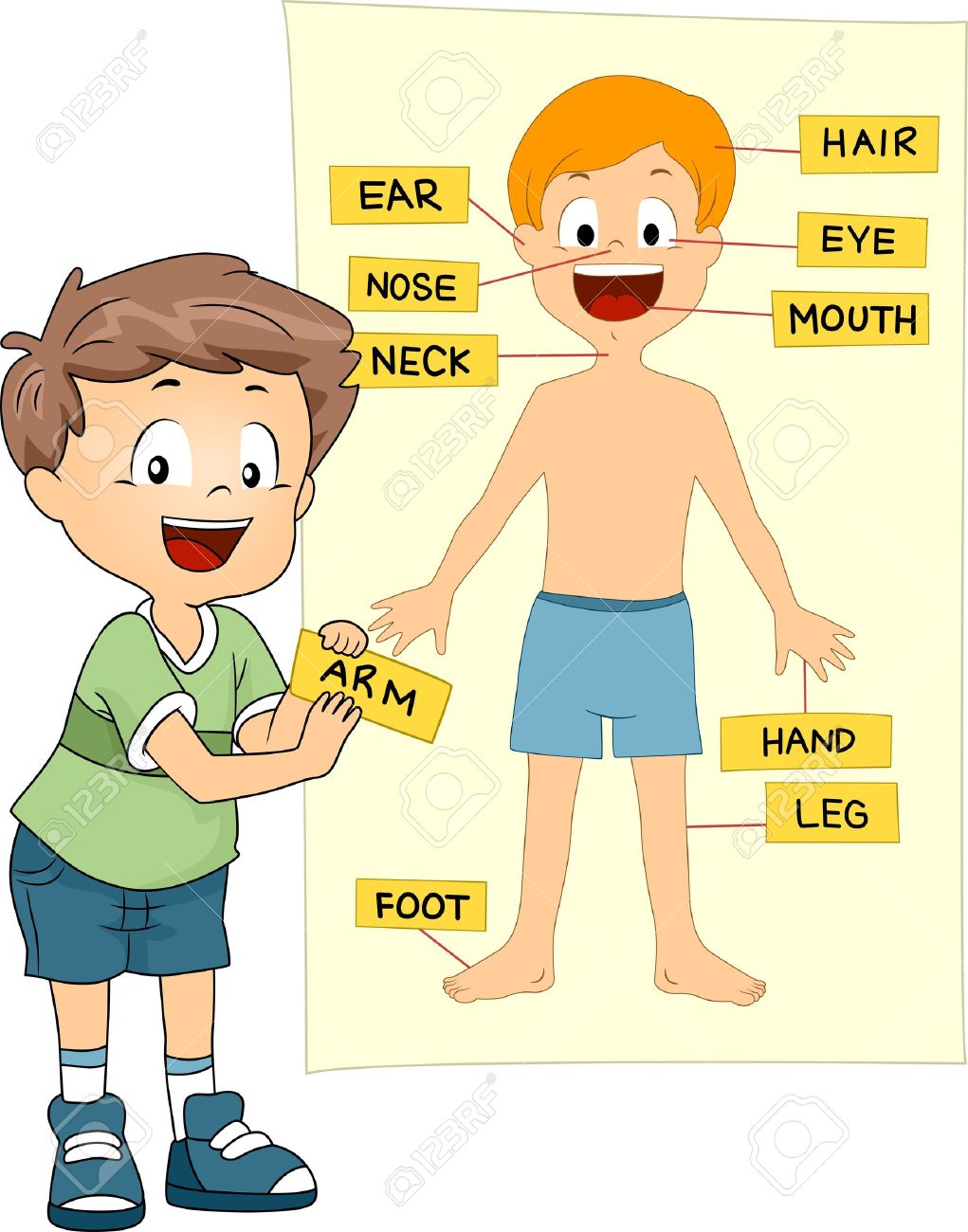 10433030 Illustration Of A Kid Identifying The Parts Of The Bodyg