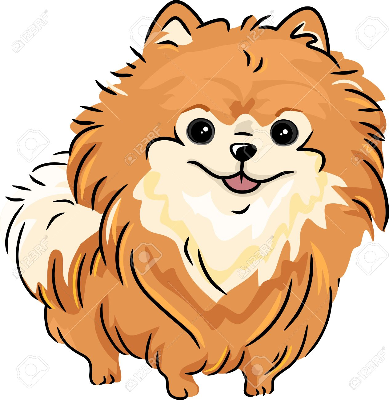 Illustration Featuring A Pomeranian Stock Photo Picture And Royalty Free Image Image 13898794