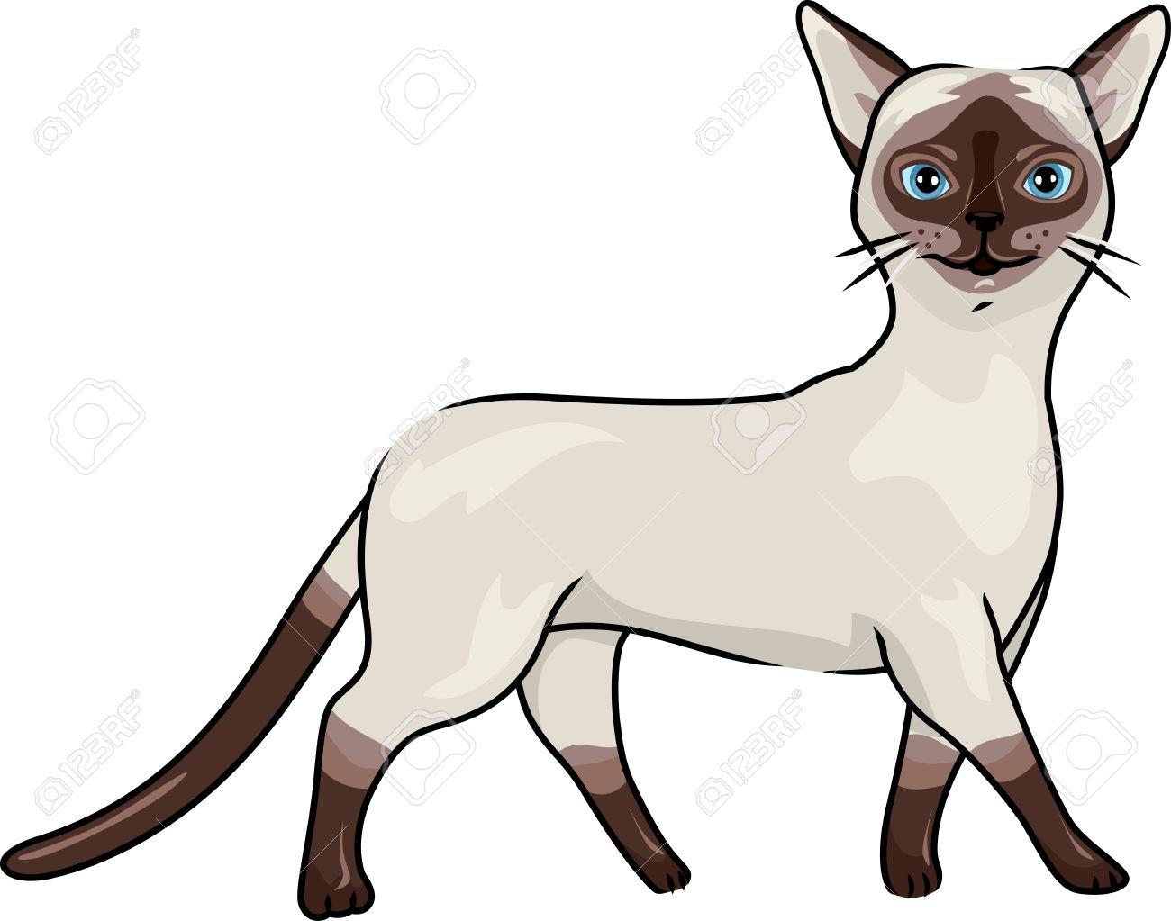 優雅に歩くシャム猫のイラスト の写真素材画像素材 Image 15067761