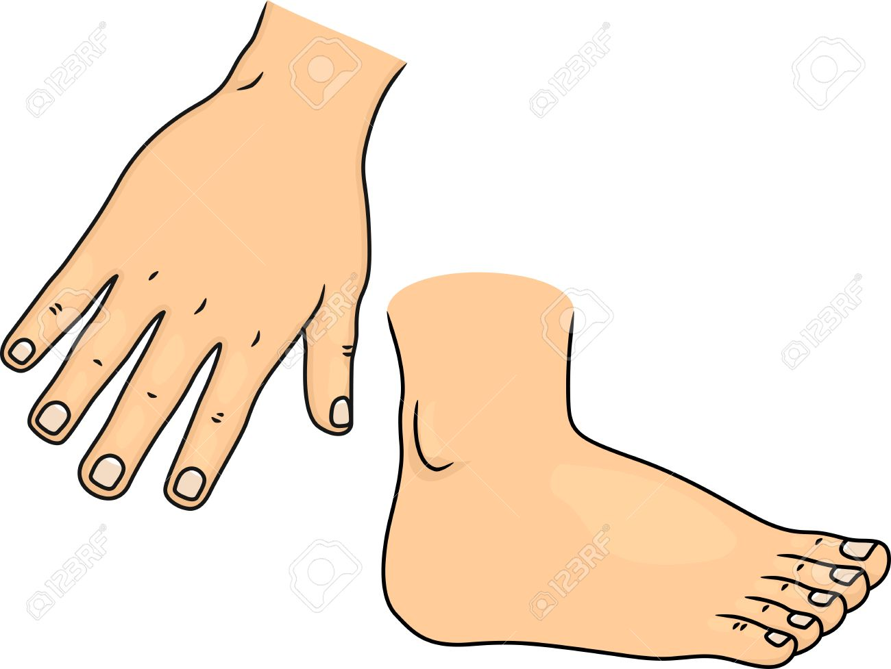 Illustration Of Hand And Foot Body Parts Stock Photo Picture And