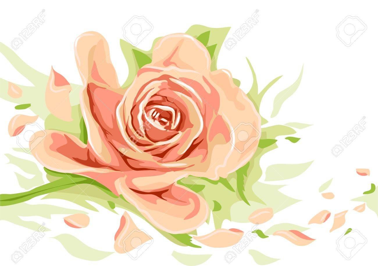 floral illustration featuring a peach colored rose royalty free