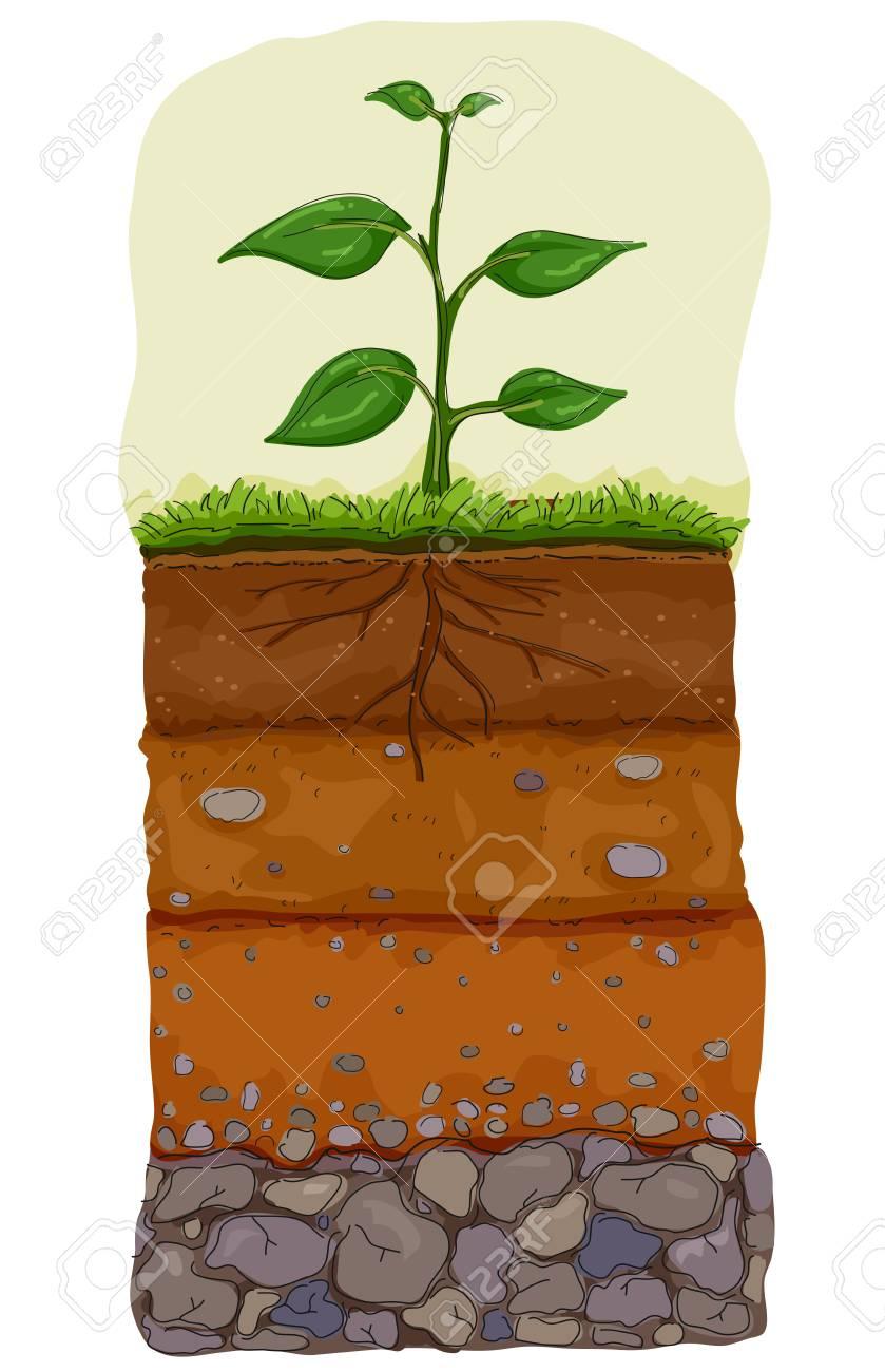 illustration of five layers of soil under a plant organic topsoil rh 123rf com Team Rock Clip Art Rock and Roll Clip Art