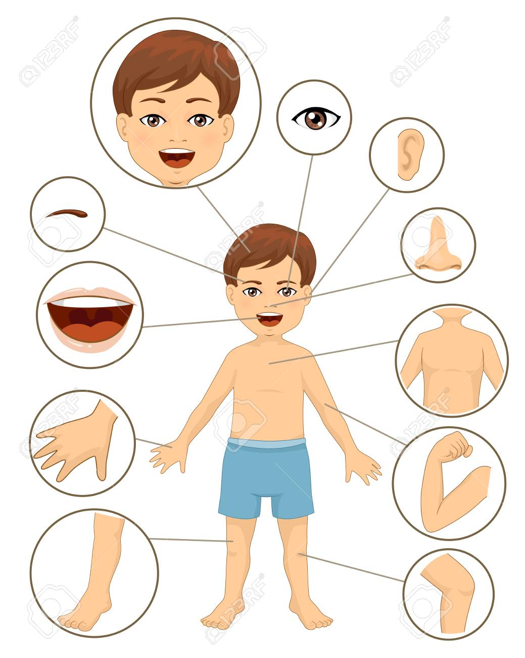 Illustration Of A Kid Boy With Different Parts Of The Body For