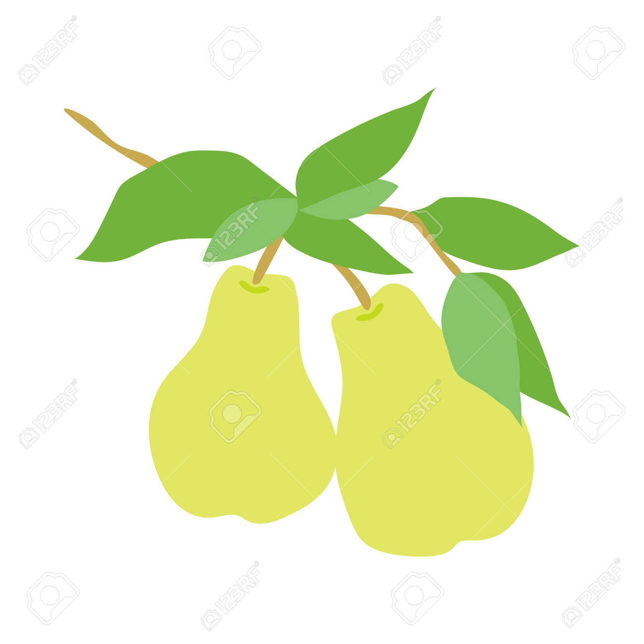 Fruit pear branch. Stock vector illustration isolated on white background. Hand drawn pears hanging on branch with leaves. Kitchen design decoration, food packaging, flat food illustration, fruit tree - 166636596