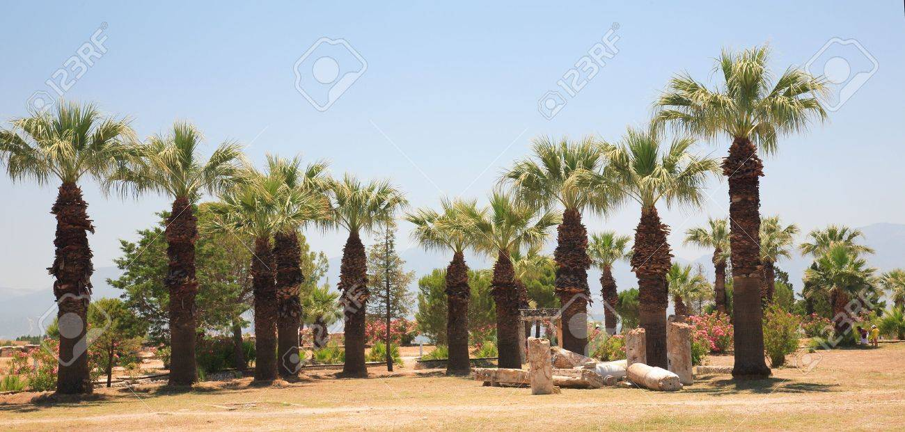 ancient city of Hierapolis (Turkey). Fan palm trees. Stock Photo - 5064173