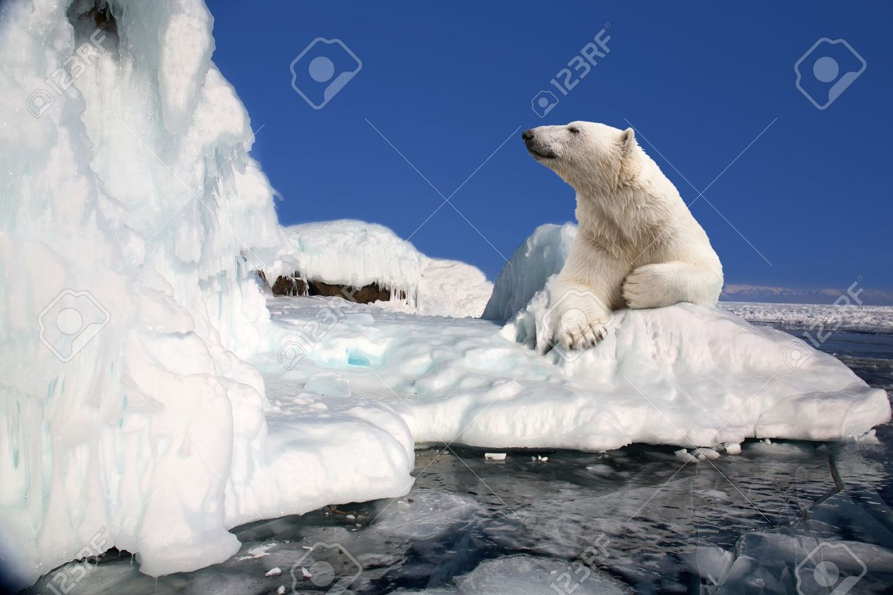 polar bear standing on the ice block - 12741719