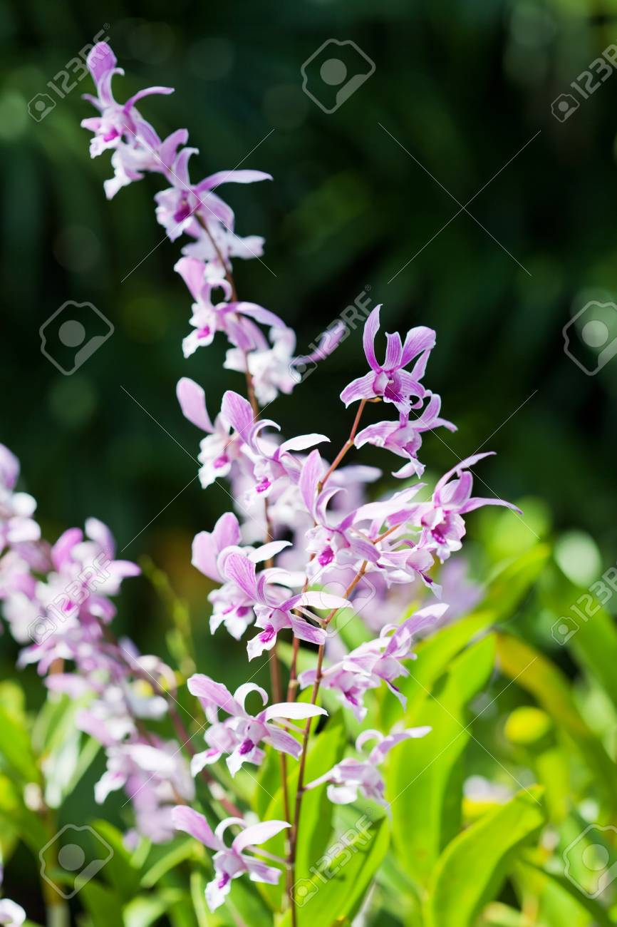 Exotic Orchids Growing On Island Bali Stock Photo Picture And