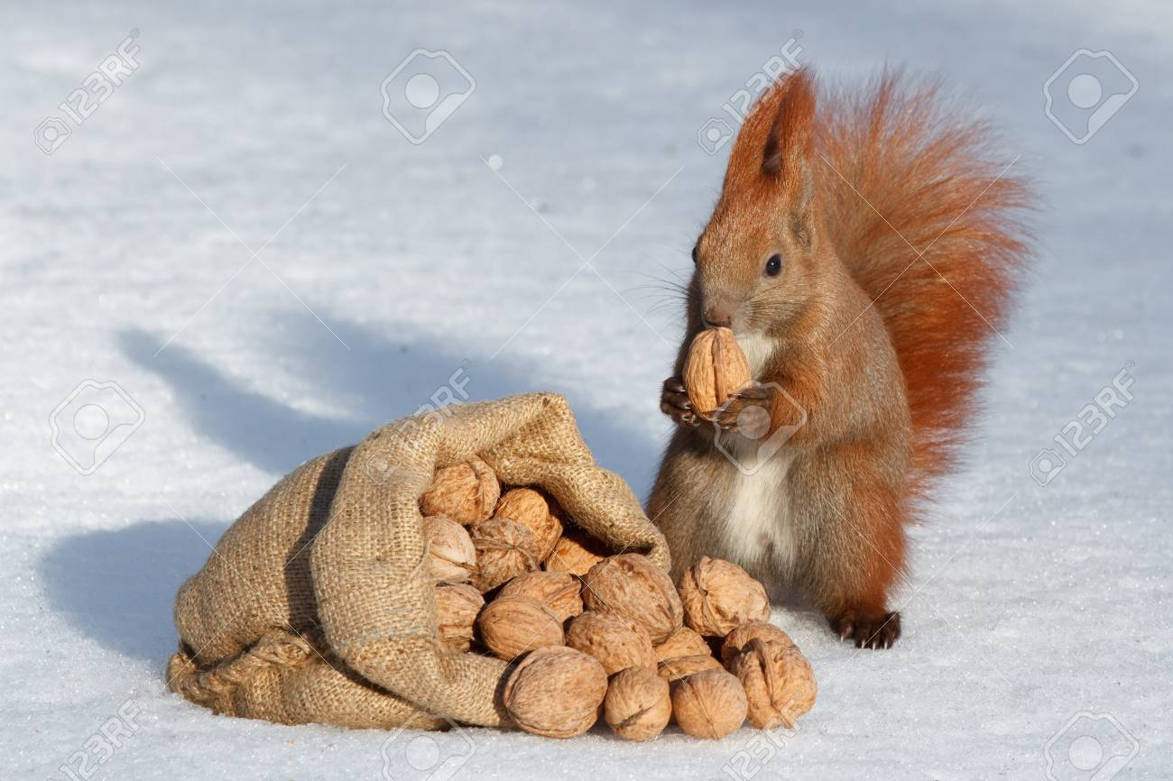 The richness of squirrel Stock Photo - 17158101