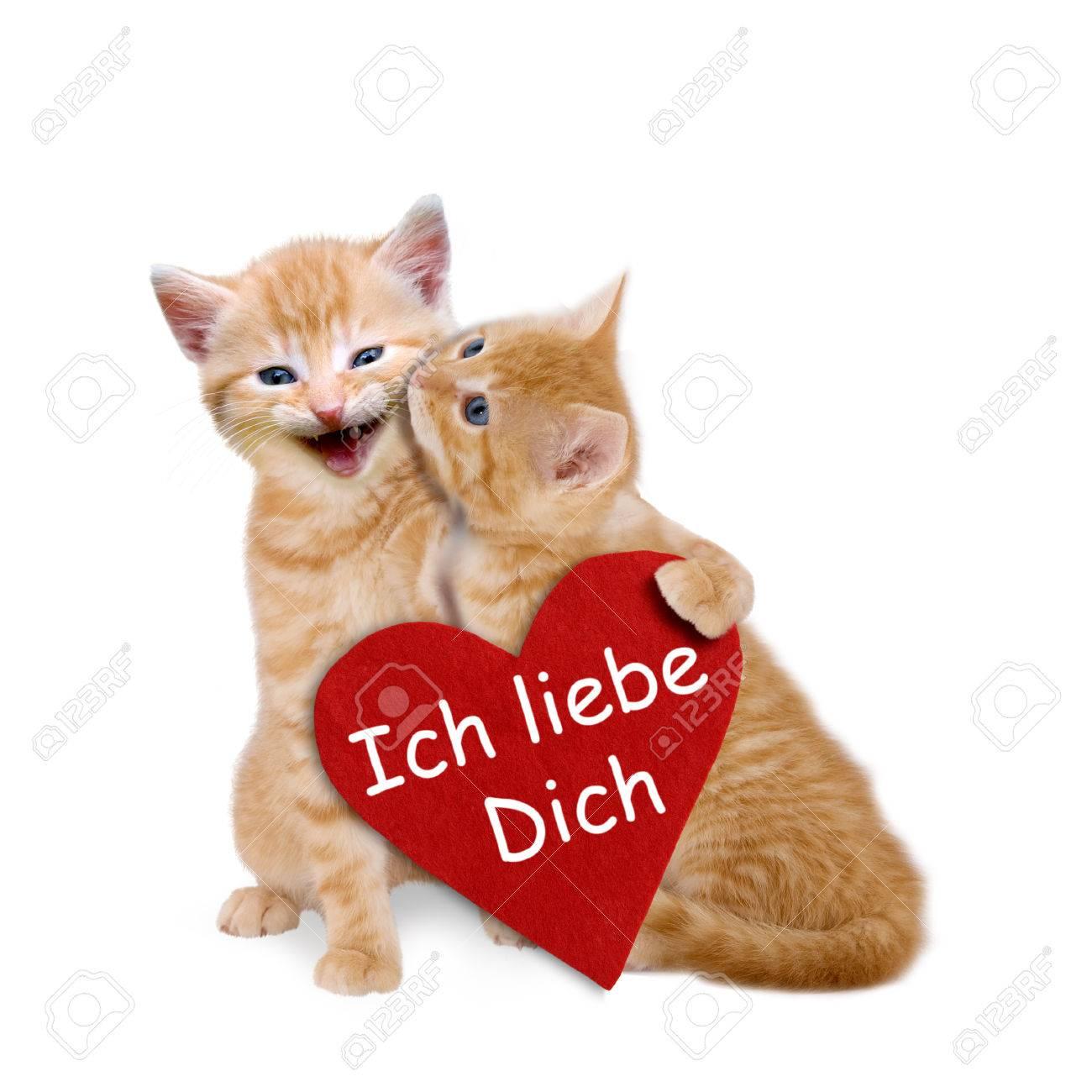 Banque dimages , Deux chats amoureux de coeur rouge sur fond blanc