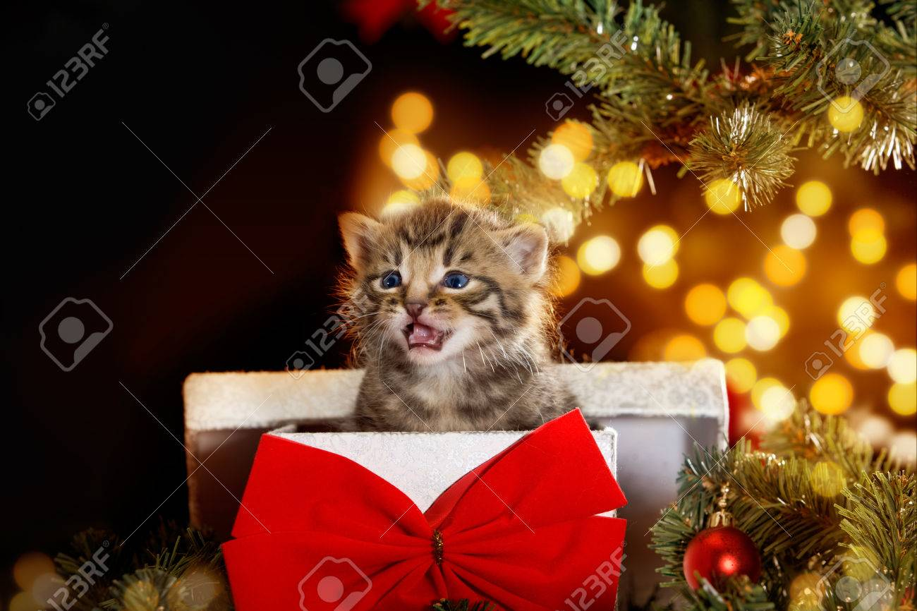 Cat / Kitten Under The Christmas Tree Sits In A Gift Box With ...