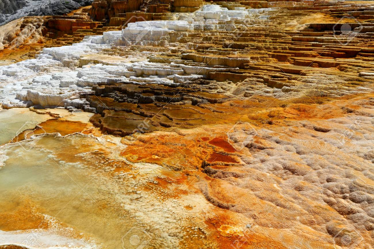 Lower Terraces Area, Mammoth Hot Springs, in Yellowstone National
