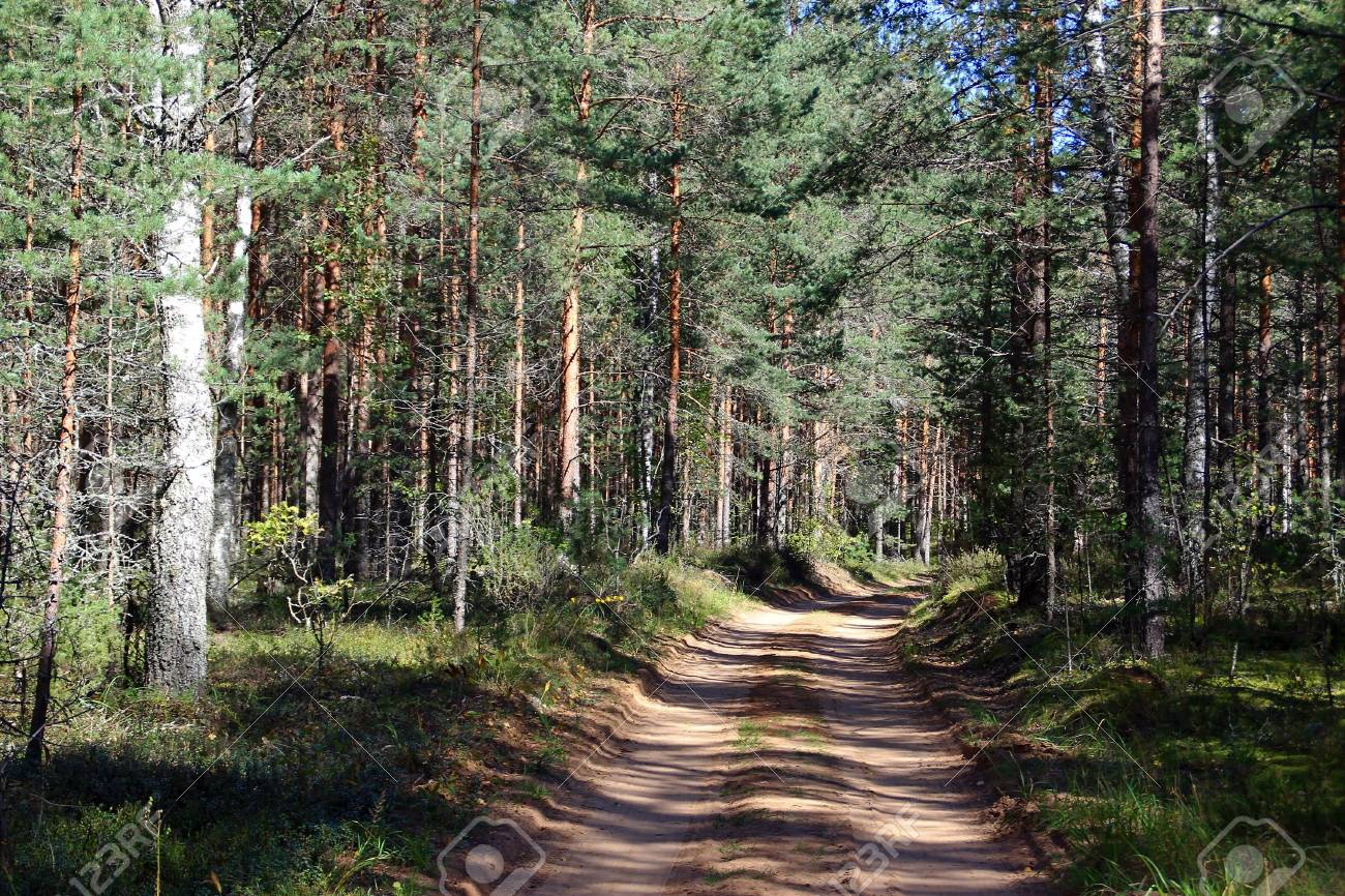 View Of The Forest Road In The Sunny Day Stock Photo Picture And Royalty Free Image Image 77746249