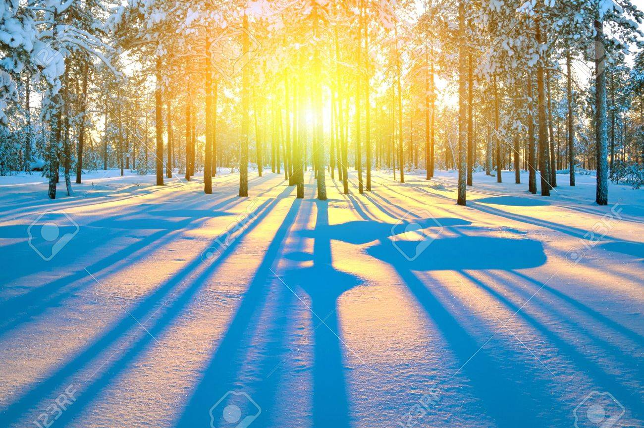 http://previews.123rf.com/images/leodikan/leodikan1202/leodikan120200008/12185175-Sunset-in-winter-forest-Stock-Photo-skiing-snow-sunlight.jpg