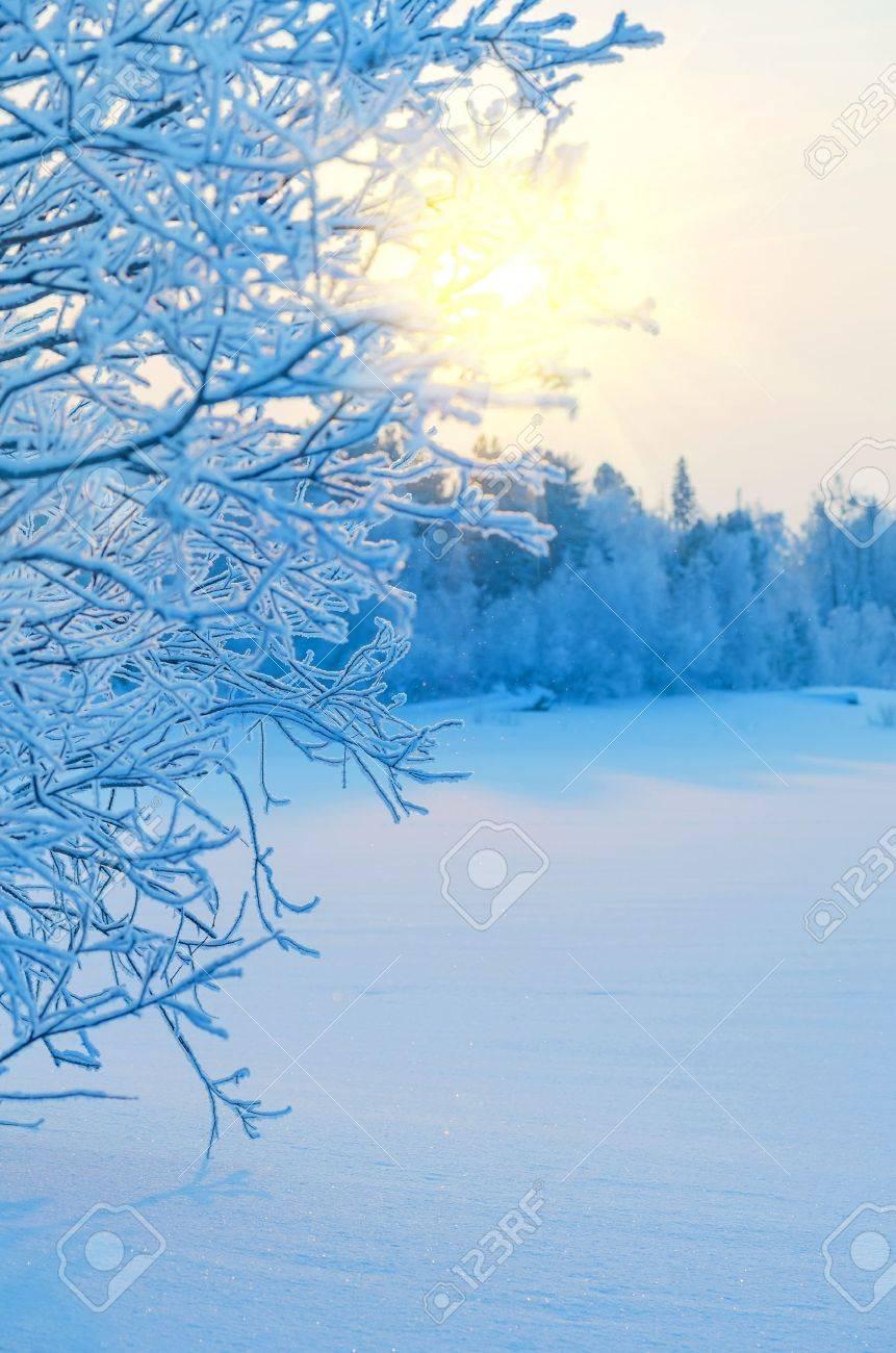 Winter Landscape Stock Photo - 15516843
