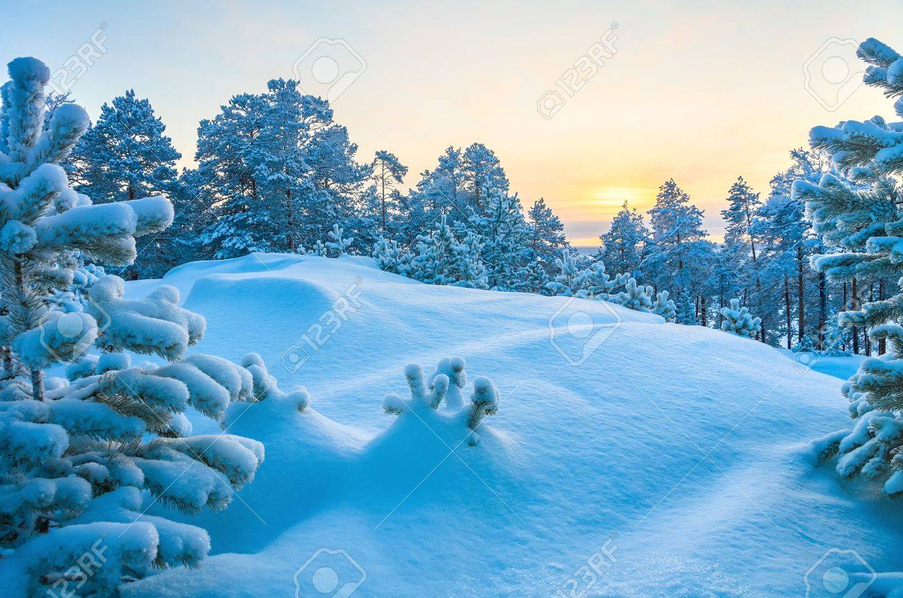 Winter Landscape Stock Photo - 16929932