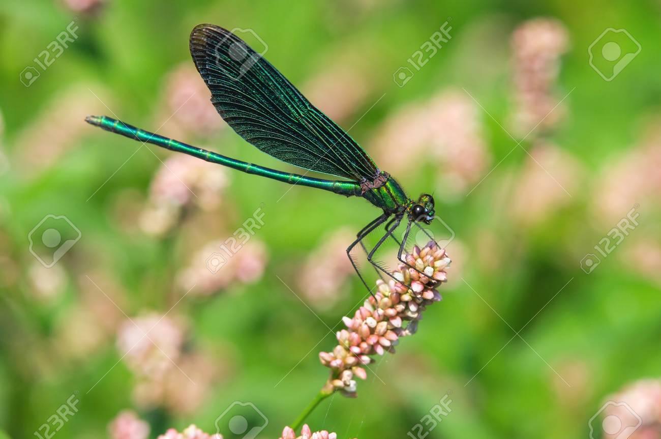 Dragonfly  Macro, close-up shot Stock Photo - 17045739