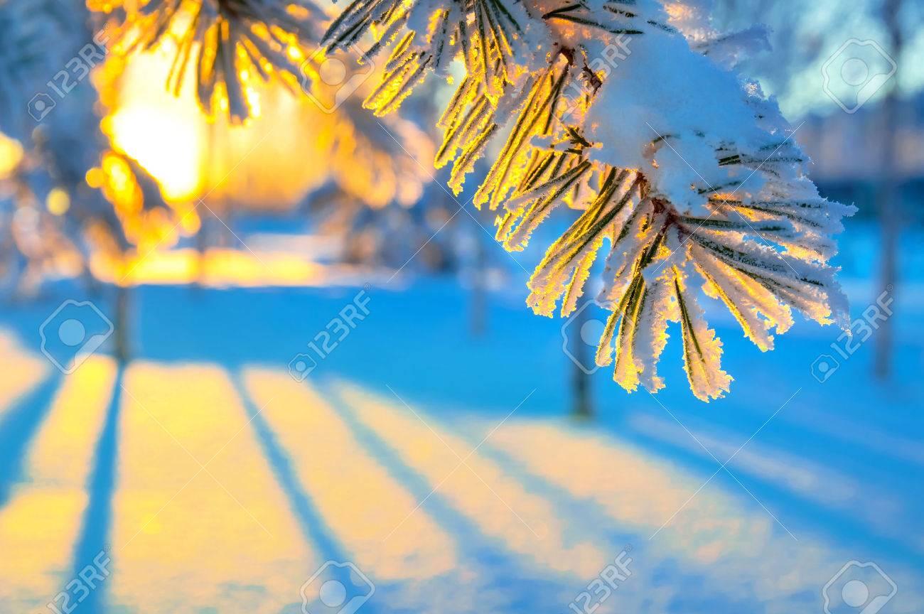 Coniferous branch against a colourful decline - 34580383