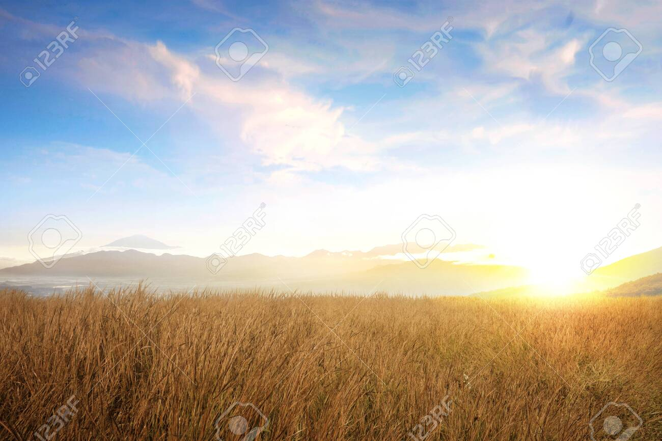 Dry grass field with sunlight over blue sky background - 129172189