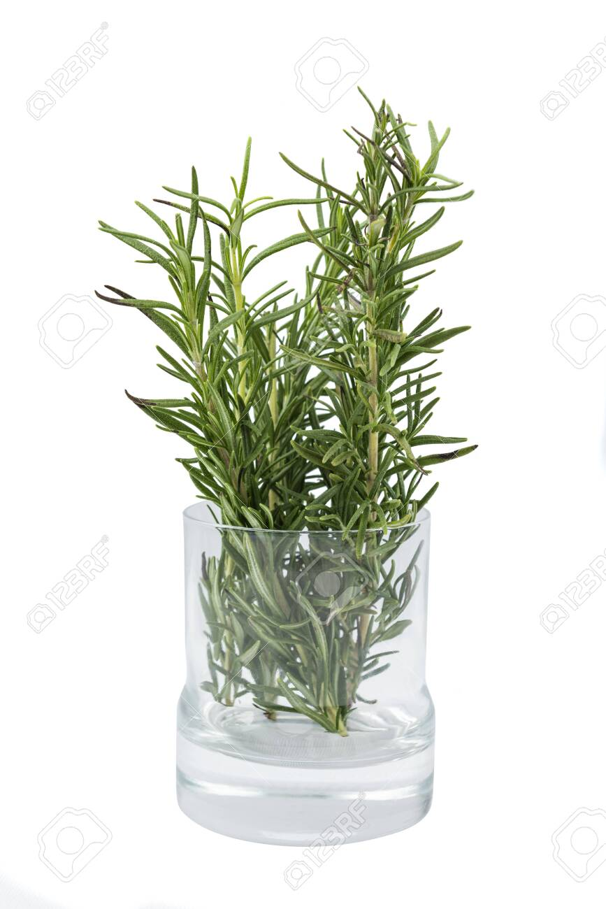 Rosemary on the glass plant pot isolated over white background - 140608073