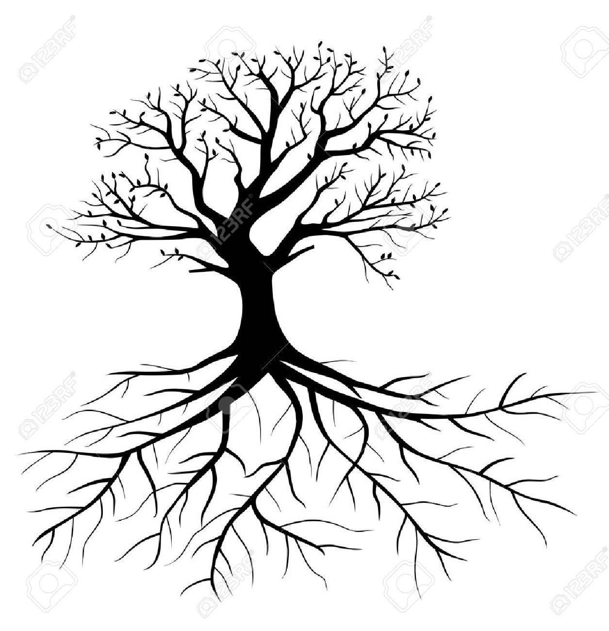 Arbre Avec Racine whole arbre noir avec des racines isolé fond blanc clip art libres