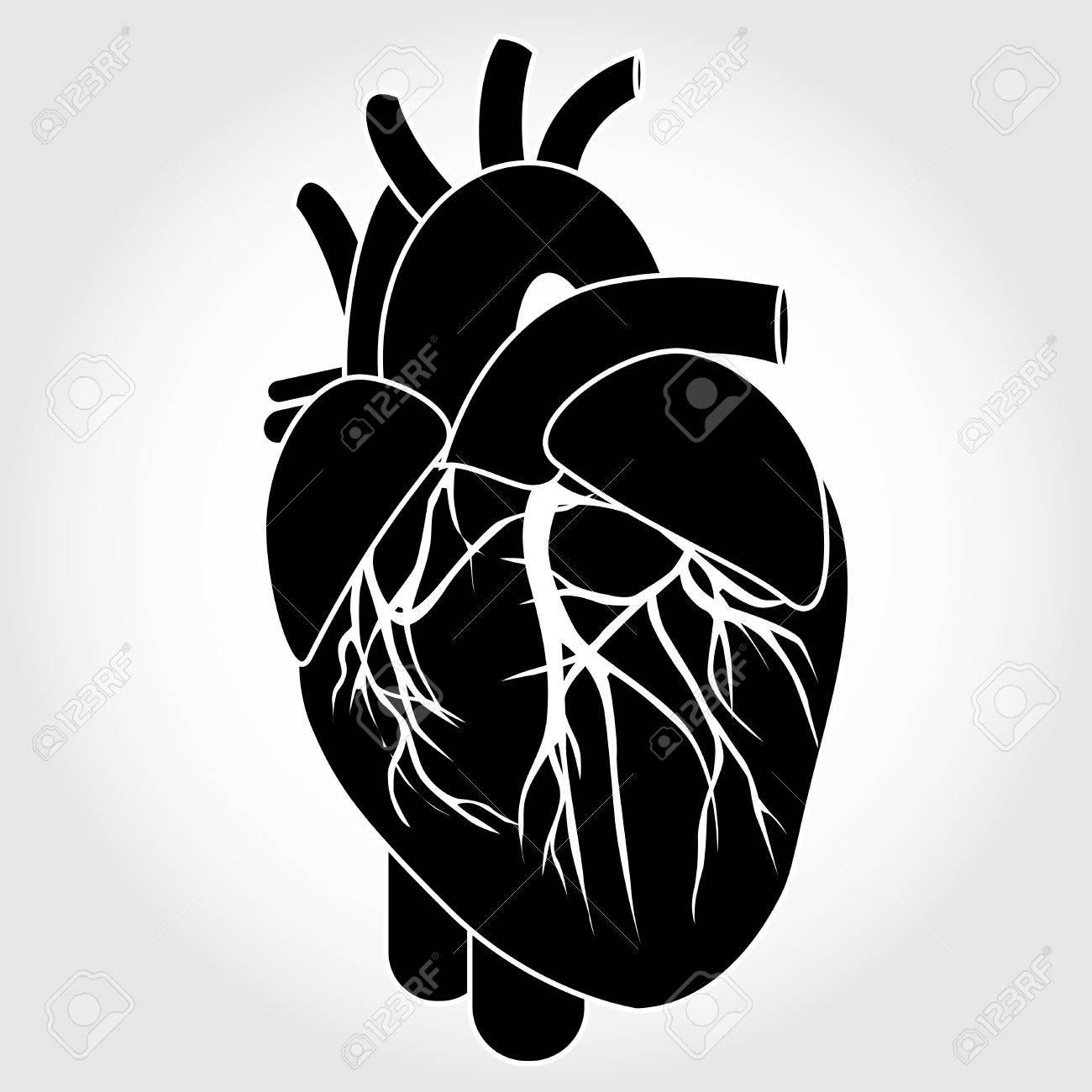 Menschliches Herz Anatomie Von Einem Gesunden Körper Isoliert Auf ...