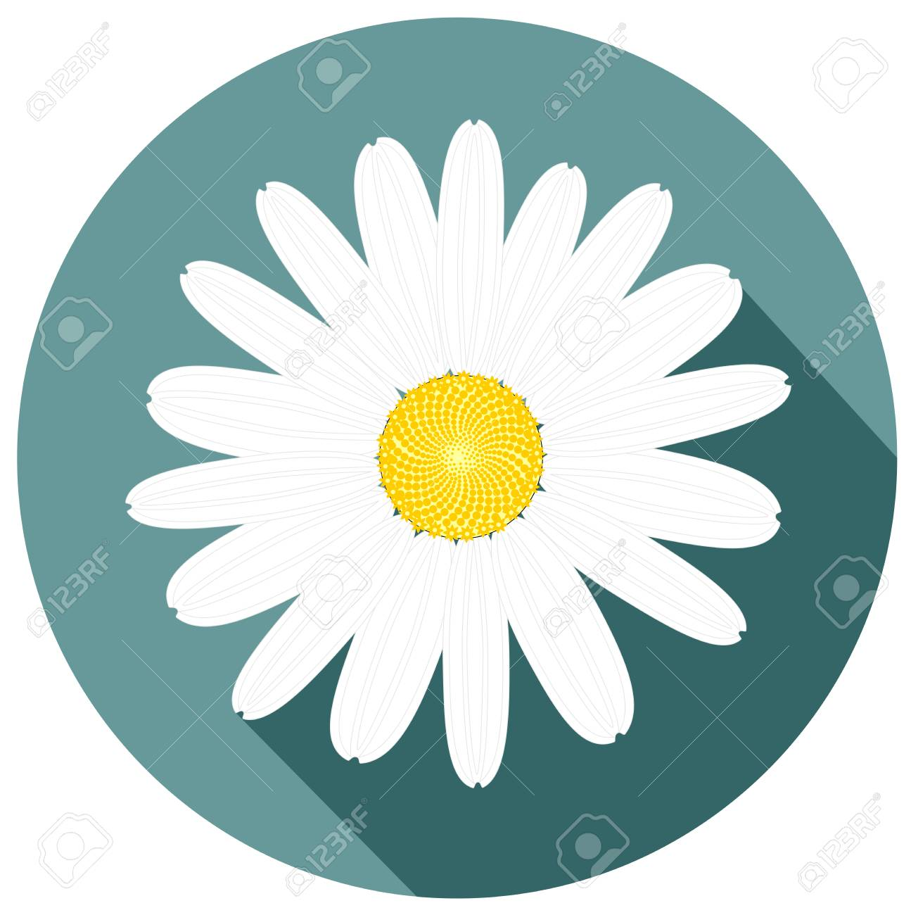 Beautiful White Daisy Flower Design For Mothers Day And Holiday