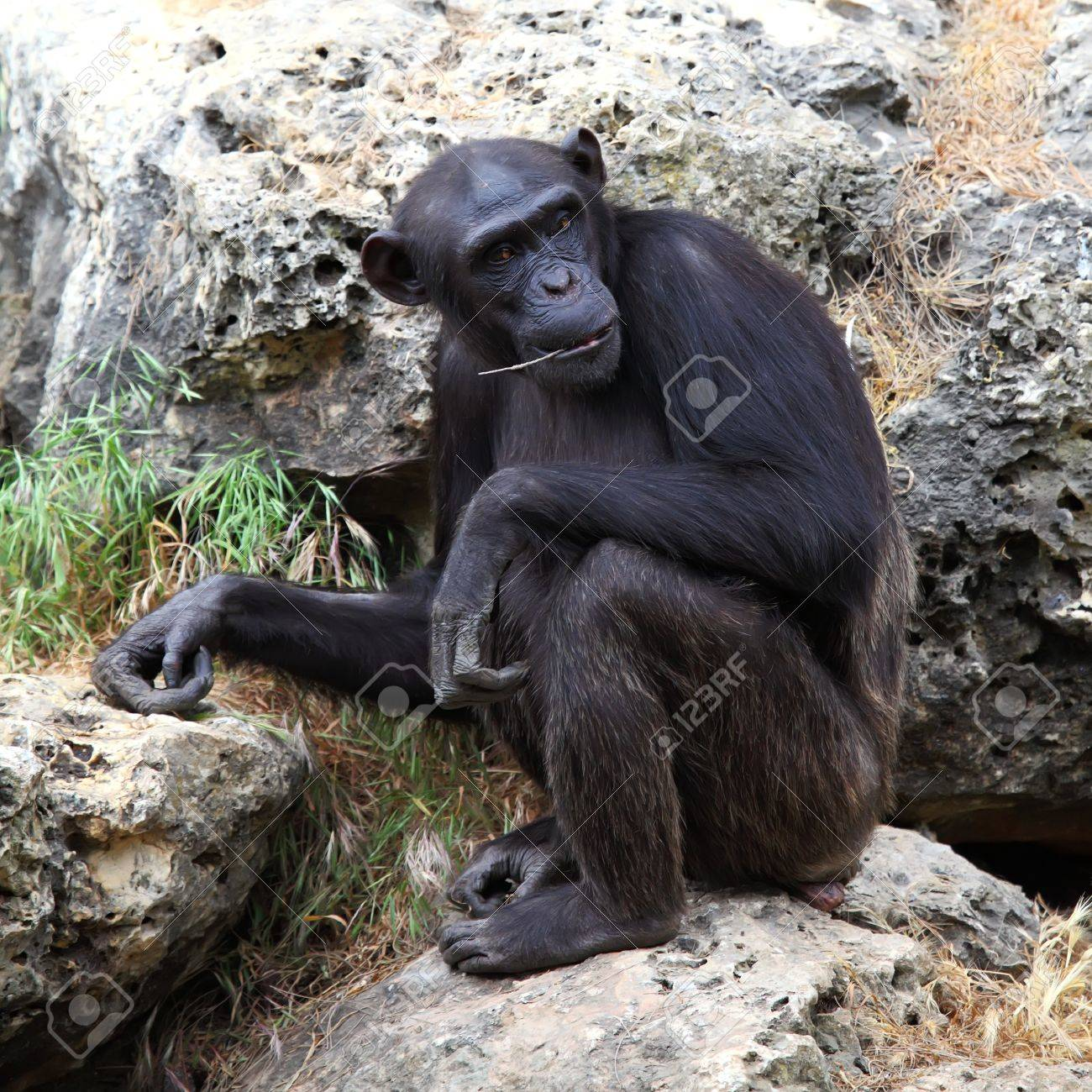 monkey sitting on a rock at the zoo Stock Photo - 15640991