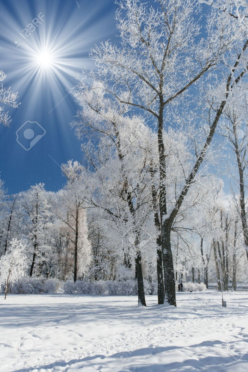 Beautiful winter landscape with snow covered trees Stock Photo - 10637817