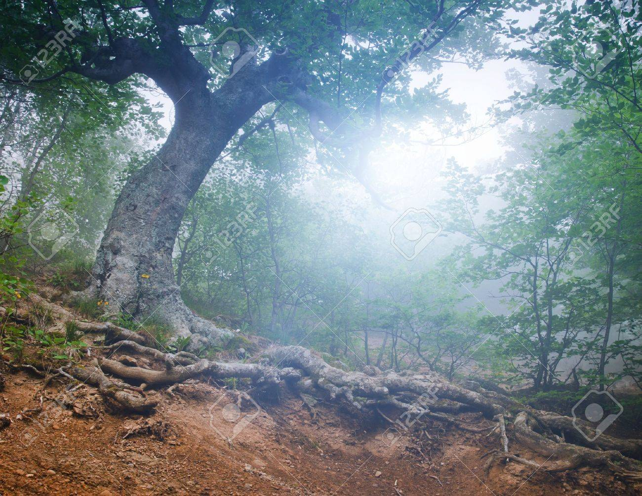 The magic forest in the early morning Stock Photo - 13188453