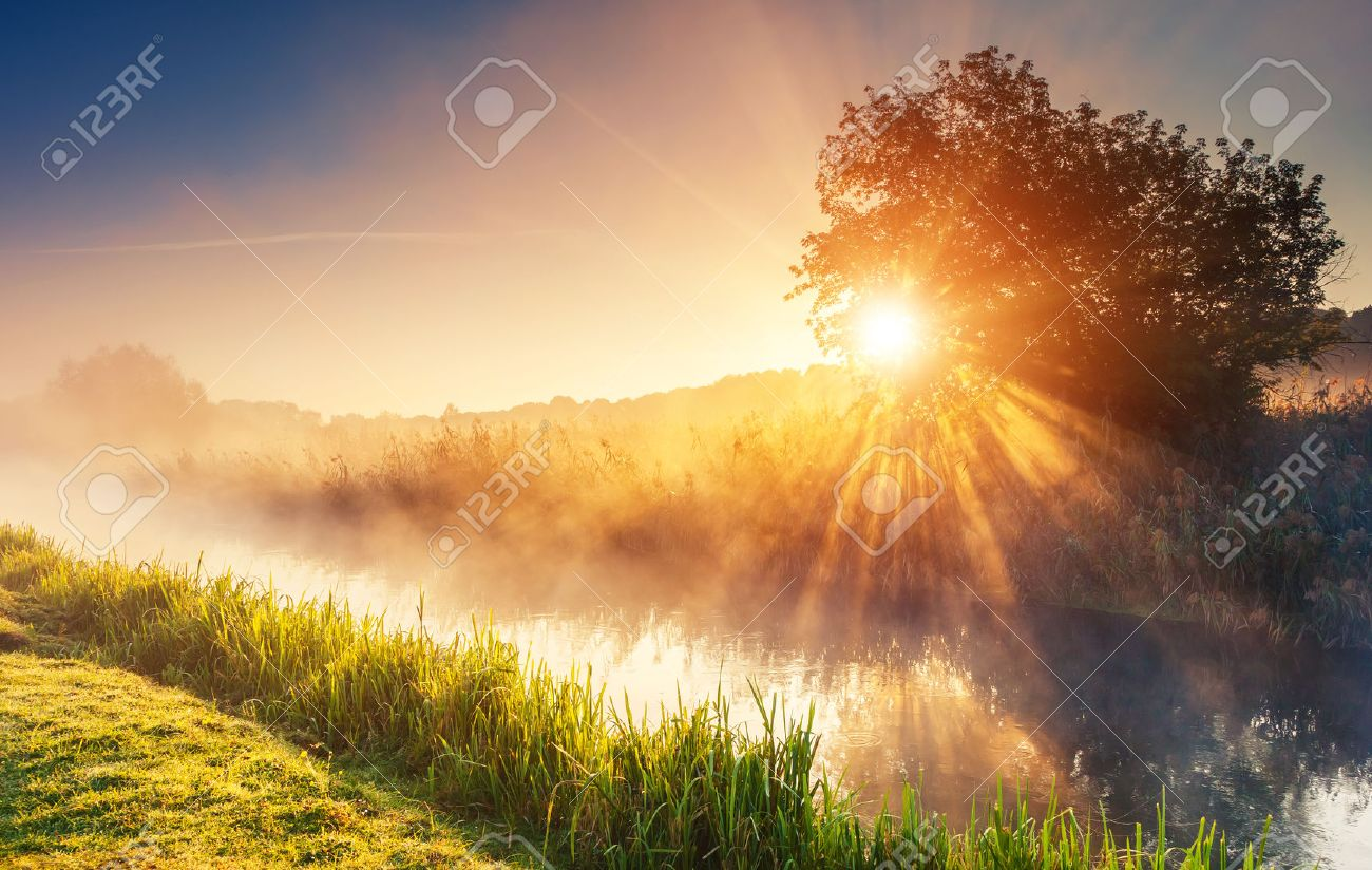 Fantastic foggy river with fresh green grass in the sunlight. Sun beams through tree. Dramatic colorful scenery. Seret river, Ternopil. Ukraine, Europe. Beauty world. - 32175141
