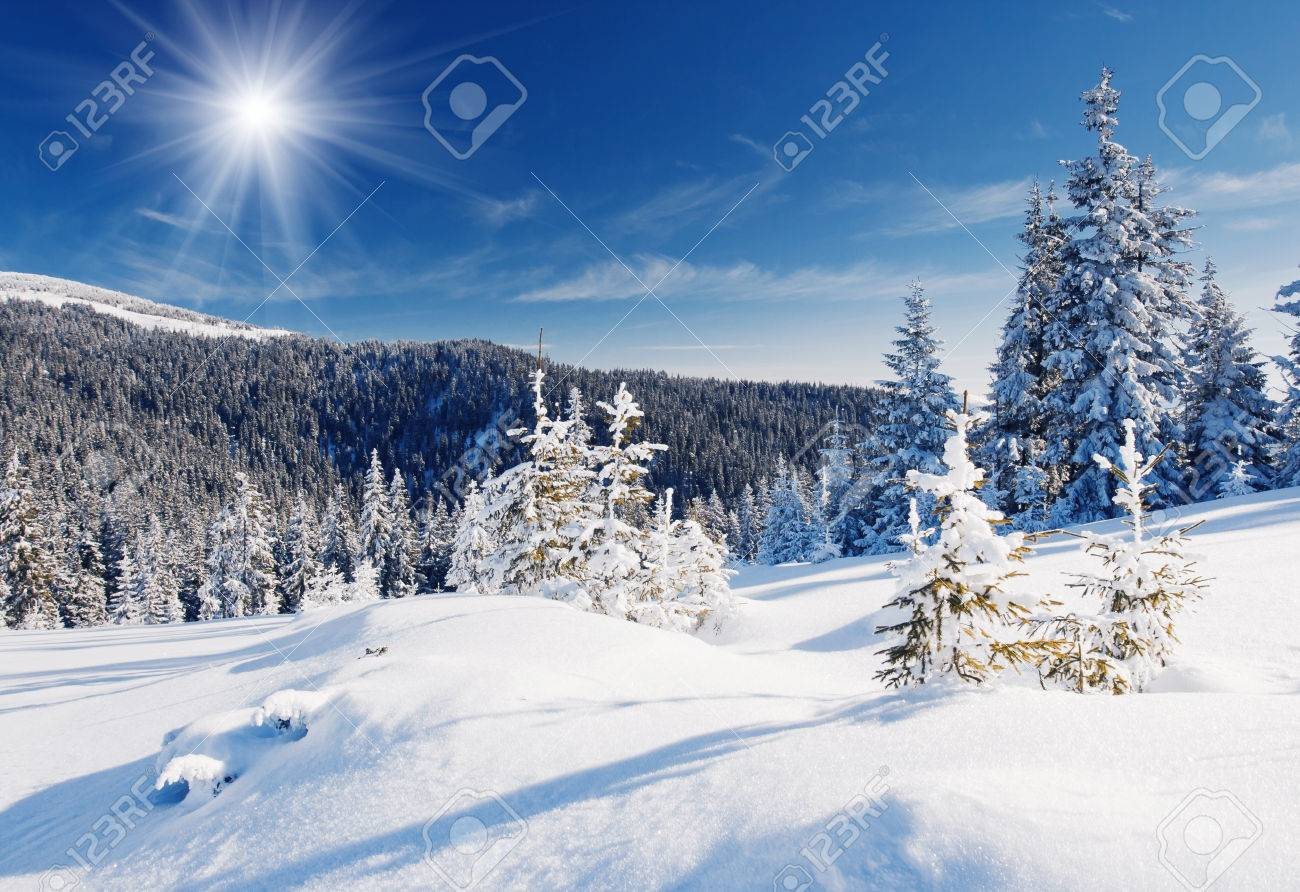 Winter trees in mountains covered with fresh snow - 47566153