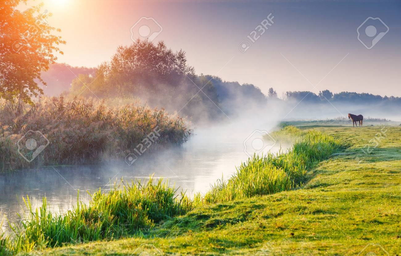 Fantastic foggy river with fresh green grass in the sunny beams. Dramatic colorful scenery. Seret river, Ternopil. Ukraine, Europe. Beauty world. - 47566141