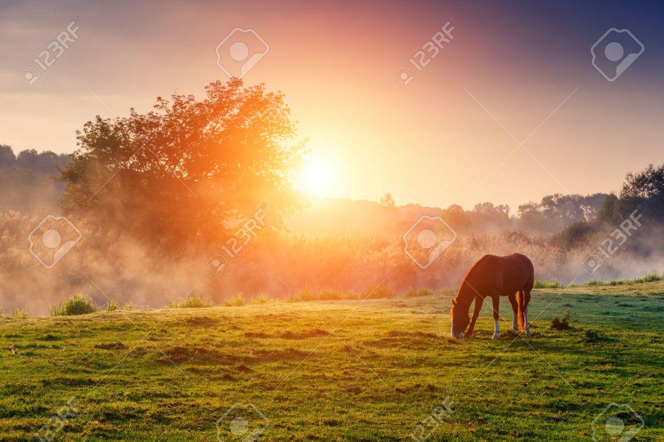 Arabian horses grazing on pasture at sundown in orange sunny beams. Dramatic foggy scene. Carpathians, Ukraine, Europe. Beauty world. - 47565924