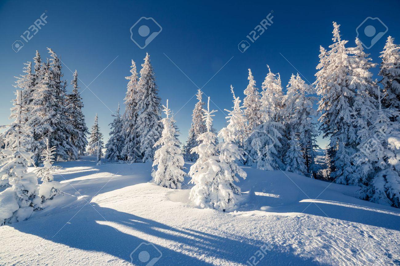 Majestic winter landscape glowing by sunlight. Dramatic wintry scene. Carpathian, Ukraine, Europe. Beauty world. Happy New Year! Stock Photo - 47565800