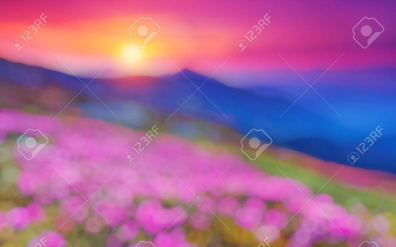 Great view of the magic pink rhododendron flowers. Natural blurred background. - 48984897