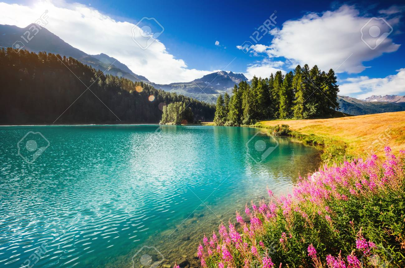 Great view of the azure pond Champfer in alpine valley. Location Swiss alps, Silvaplana village, district of Maloja, Europe. - 85415832