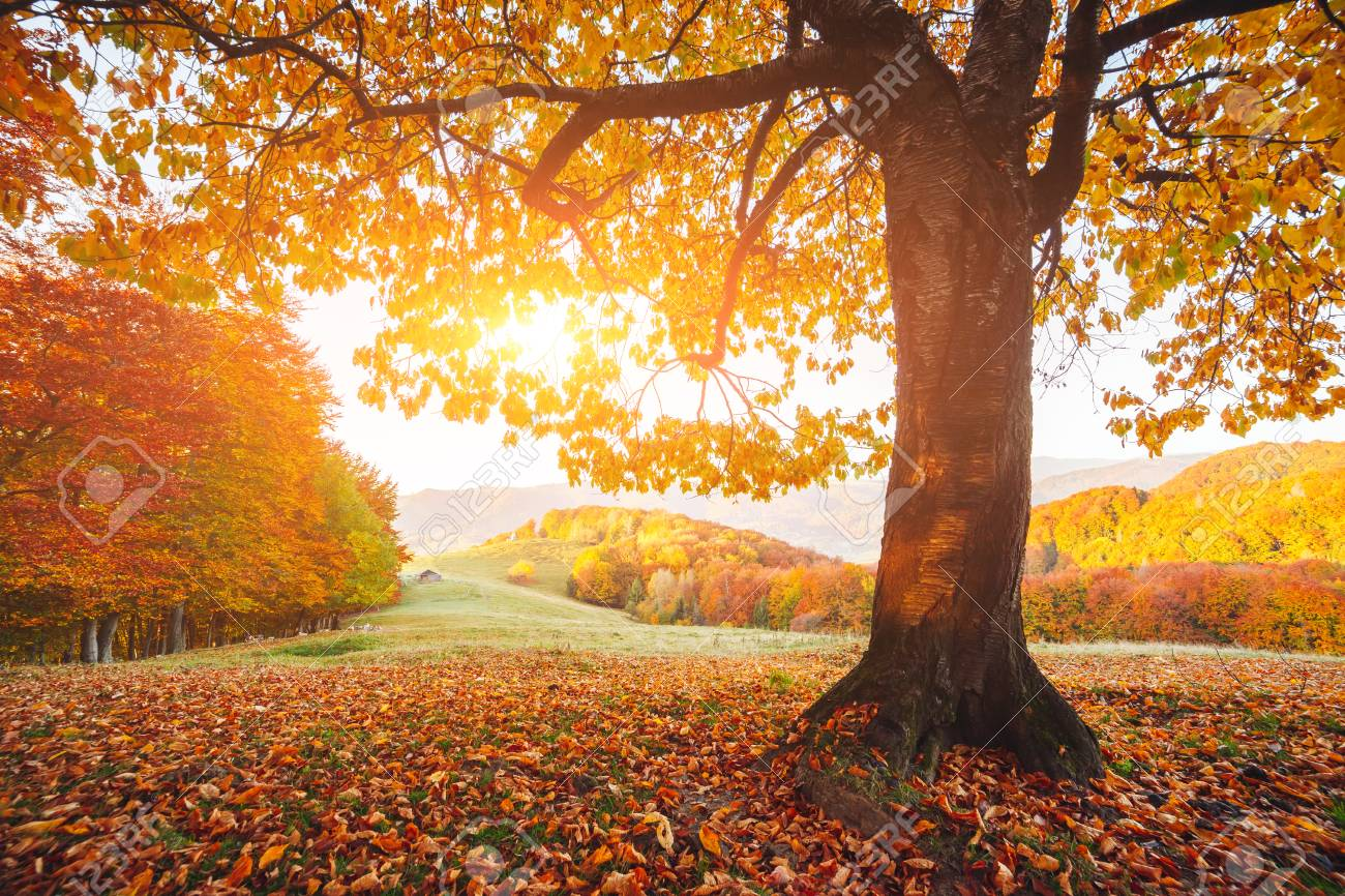 Stunning Image Of The Bright Trees In Sunny Beams Gorgeous Day