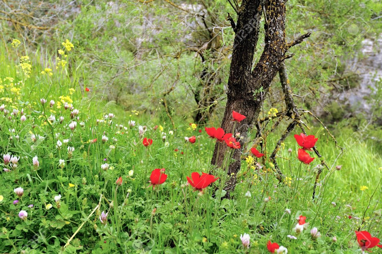 Profondeur ( Existence / Connaissance ) 43640800-belle-clairi%C3%A8re-vert-avec-des-fleurs-d-an%C3%A9mone-rouge-