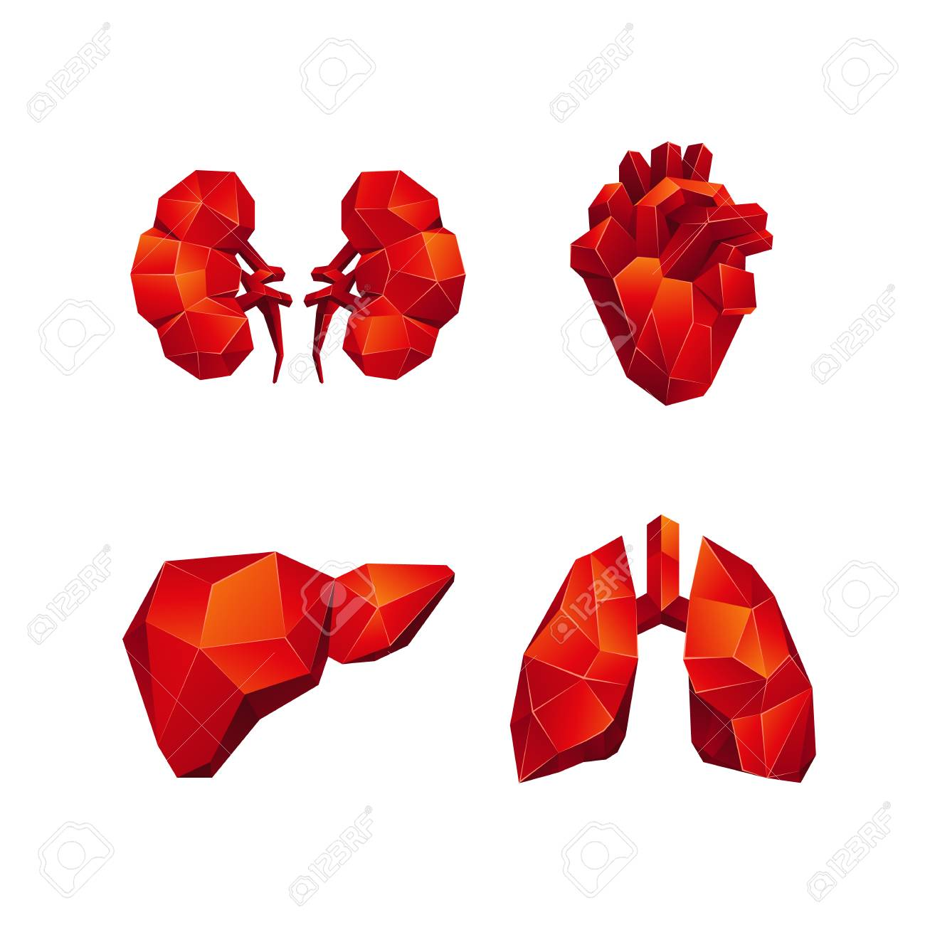 Red Low Poly Human Internal Organs Set On A White Background ...