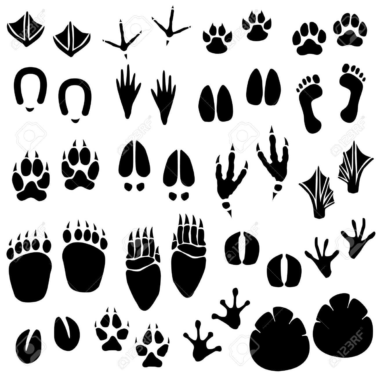 animal foot clipart | Logo More