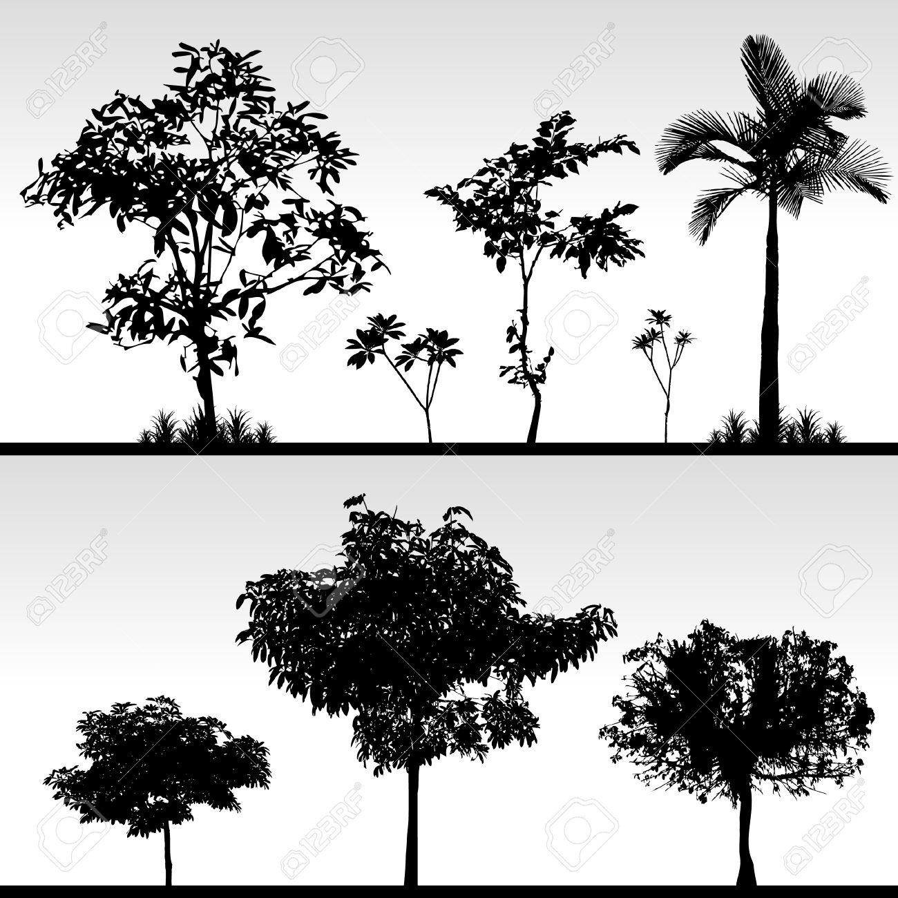 Palm Trees Black And White Palm Tree Black Tree Bush