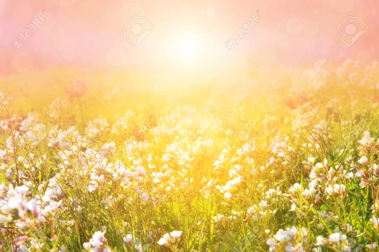 Morning meadow in the sunbeams. Blurred artistic picture. - 139331823