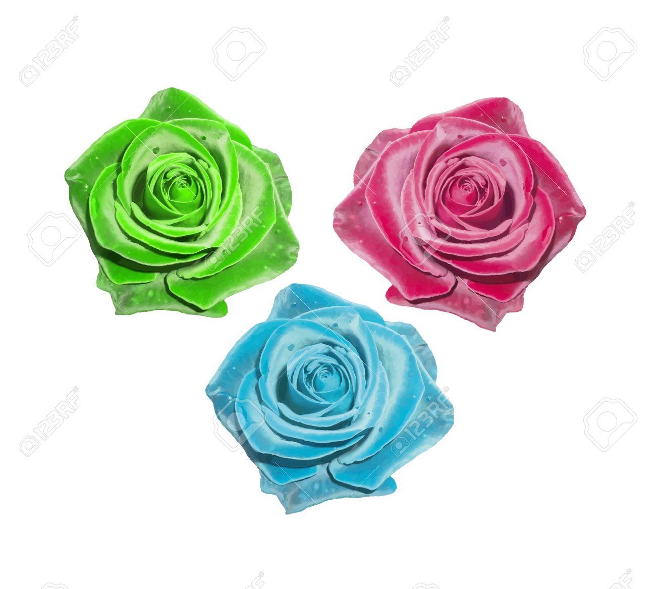 Rose Rouge Rose Verte Une Rose Bleue Vector Illustration Fleur