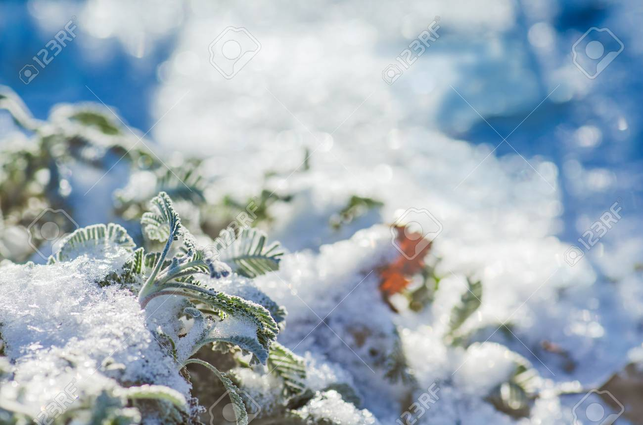 Garden With Perennials Flowers Covered With Snow In Winter Stock
