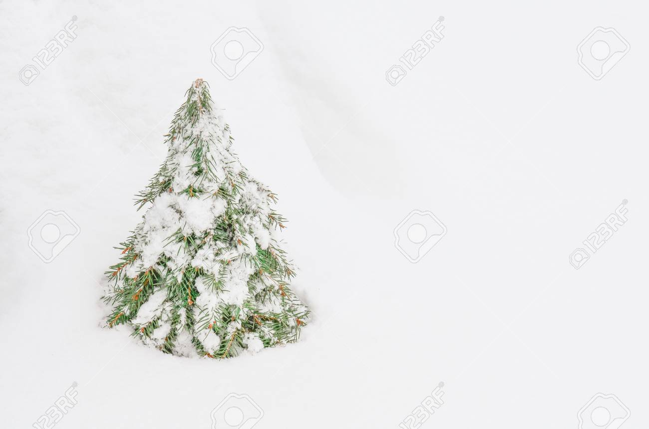 Make A Cone Christmas Tree Based On Warp A Cardboard Or Styrofoam Stock Photo Picture And Royalty Free Image Image 91201961