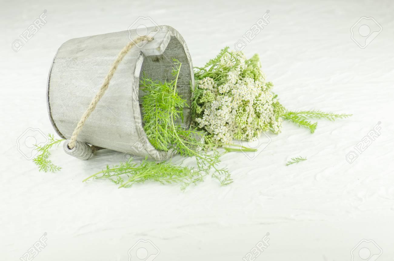 Bunch achillea millefolium with white flower bundle of yarrow bunch achillea millefolium with white flower bundle of yarrow yarrow on white background mightylinksfo