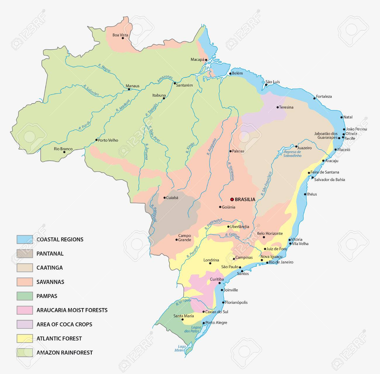 Vegetation Map Of Brazil Royalty Free Cliparts Vectors And Stock