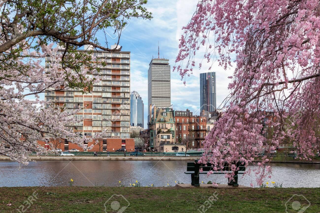Cherry Blossom in Boston - 143359365