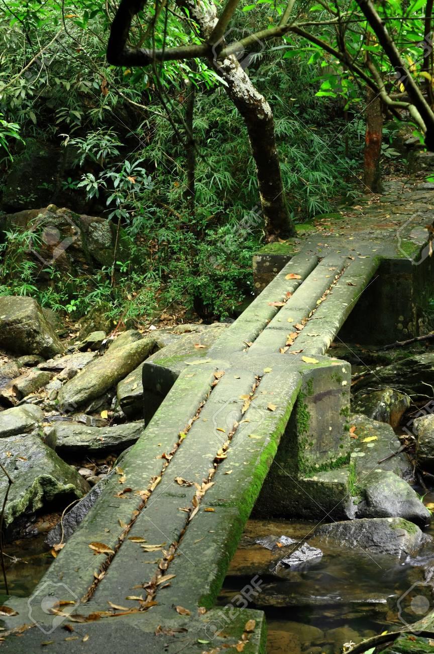 footbridge in forest Stock Photo - 6423812