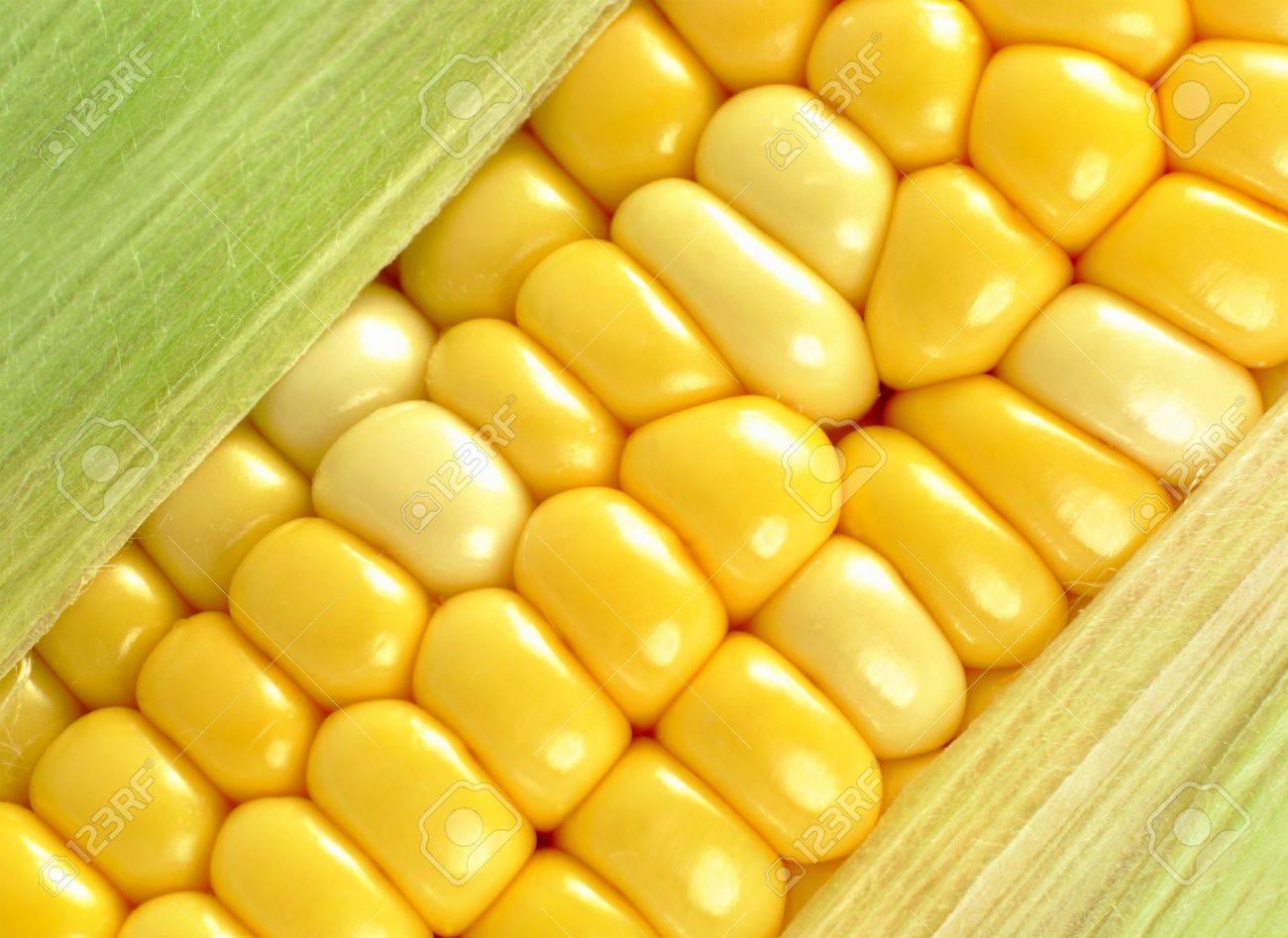 corn close up Stock Photo - 9115171